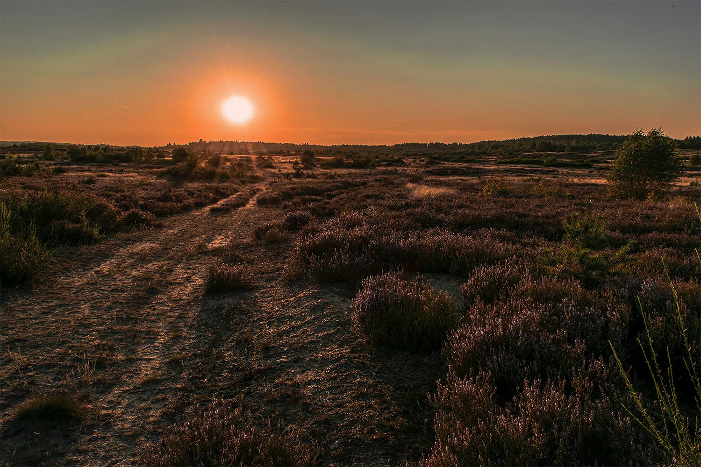 Zachód słońca nad Wrzosowiskami Okoneckimi. Fot. Marcin Maziarz