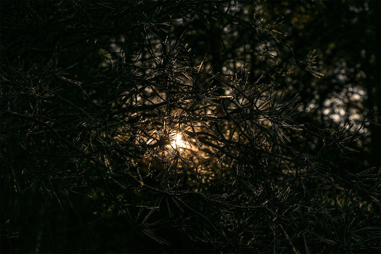 Fot. Marcin Maziarz