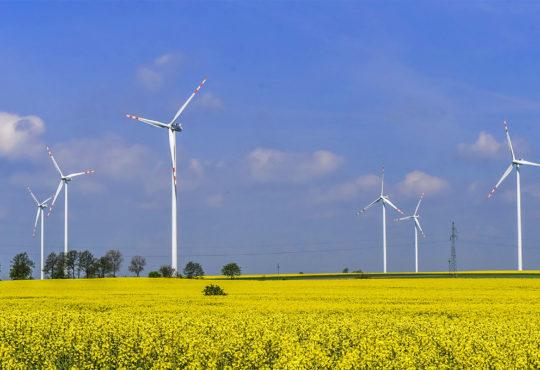 Farma wiatrowa w Blękwicie koło Złotowa. Fot. Marcin Maziarz