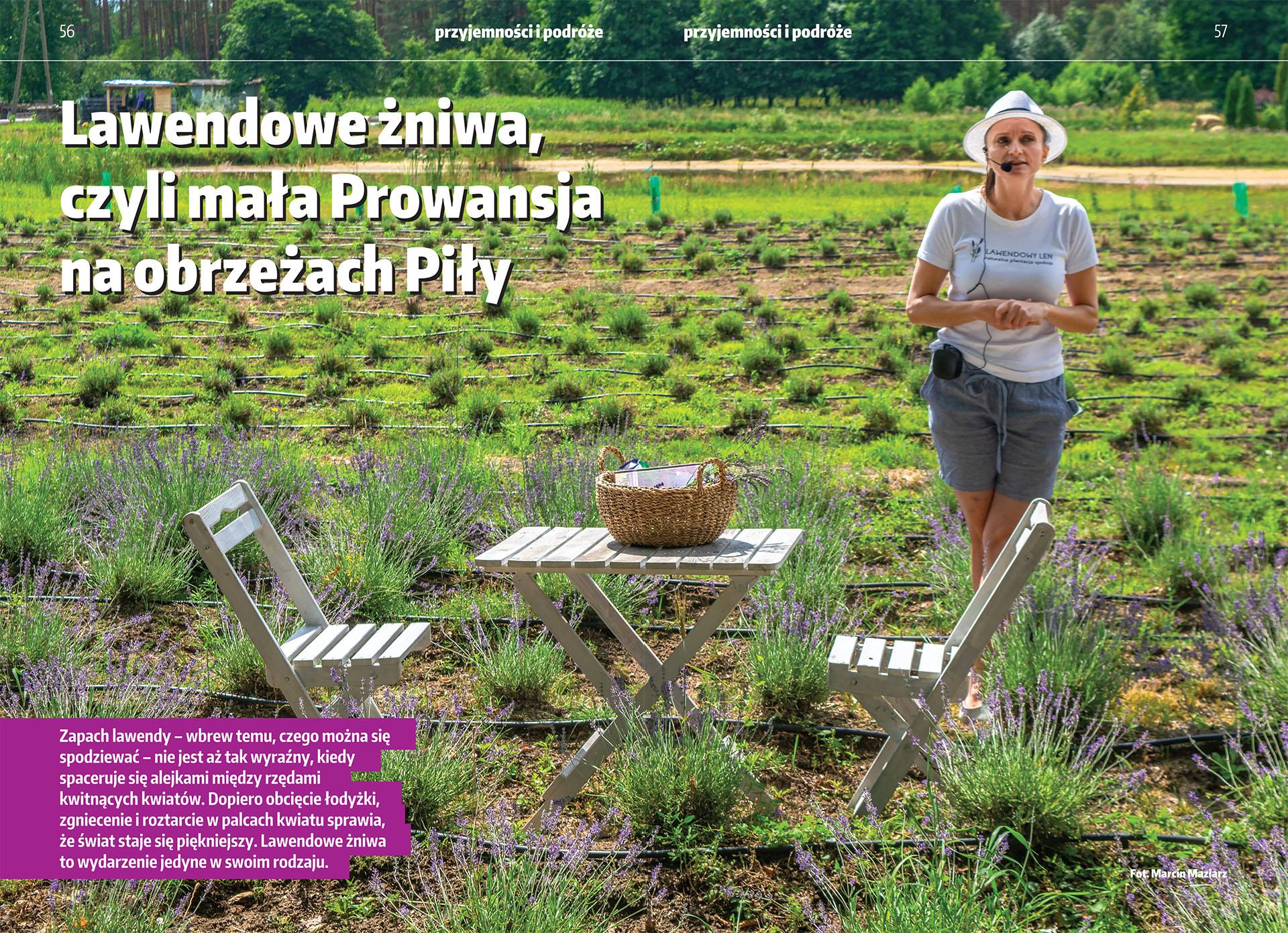 Lawendowe żniwa. Mała Prowansja na przedmieściu Piły.
