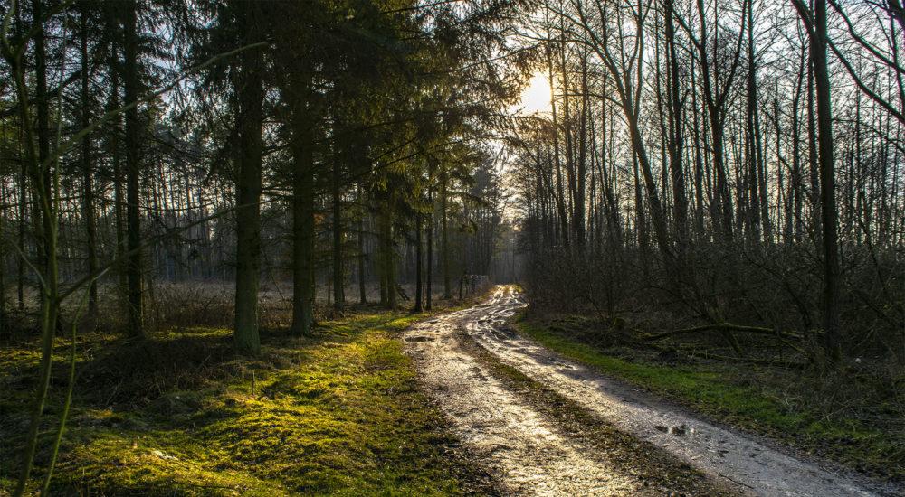 Wczesną wiosną dobrze zjechać z głównej drogi. Fot. Marcin Maziarz