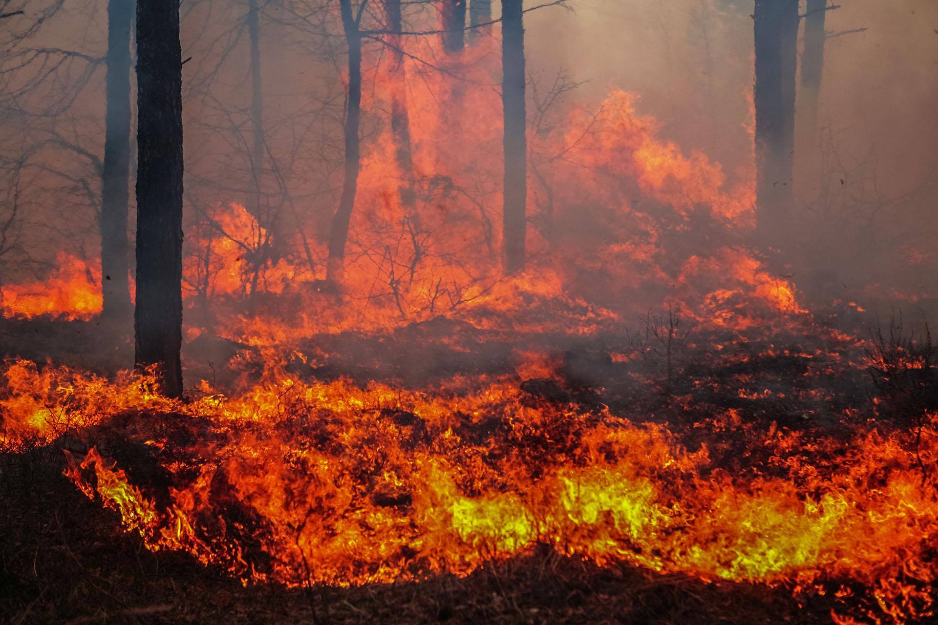 Źródłem ognia, od którego zaczął się pożar w Biebrzańskim Parku Narodowym prawdopodobnie była podpalona łąka. Fot. Chroma Stock