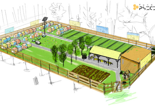 Tak będzie wyglądać Ogród i Pasieka Społeczna w Pile. Fot. Fundacja Pszczoła