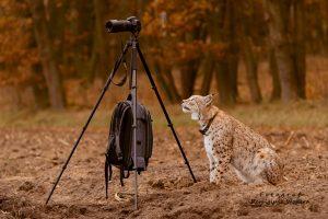 Jak ryś Piernik próbował fotografować…