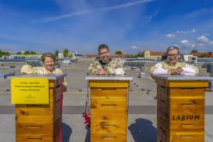 Podkast w terenie #3: pasieka na dachu Vivo. Jak żyje się pszczołom w centrum Piły?