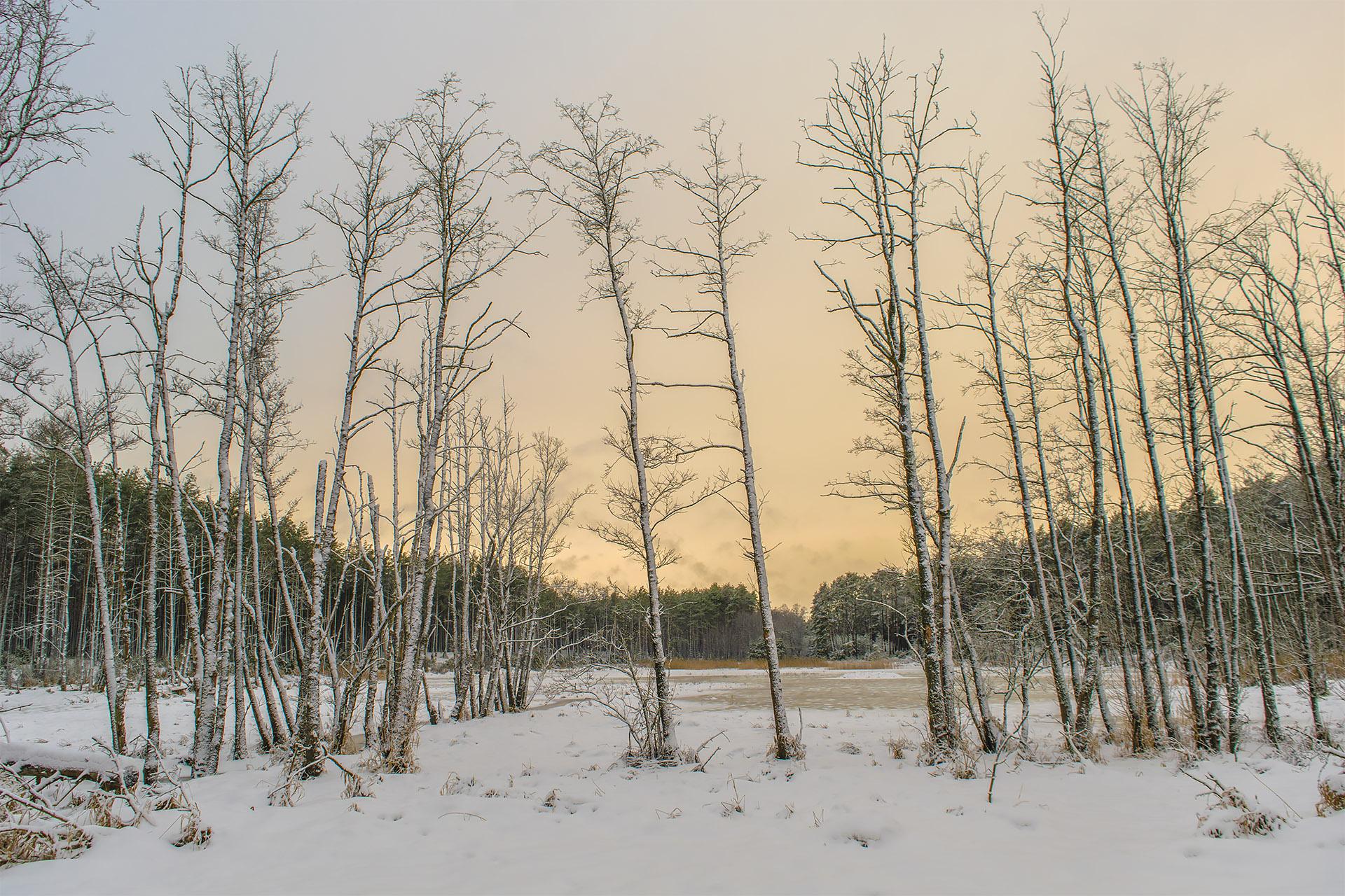 Jedno z malowniczych rozlewisk Pankawy w naprawdę zimowej scenerii. Fot. Marcin Maziarz