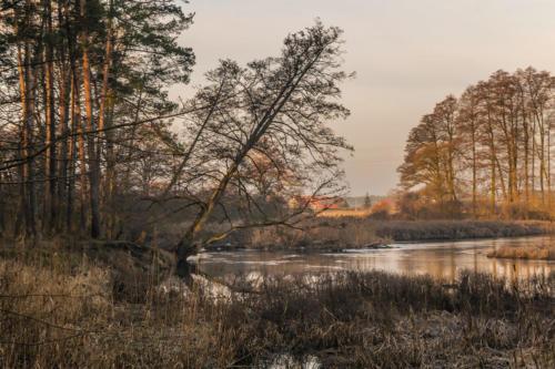 Meandry Gwdy w Pile - Kalinie. Königsblick - Królewski Widok. Fot. Marcin Maziarz