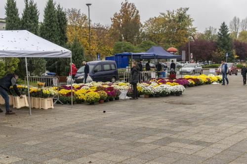 Targ Chryzantemowy w Pile. Pierwsi ogrodnicy pojawili się około 13.00. 2 listopada 2020. Fot. Marcin Maziarz