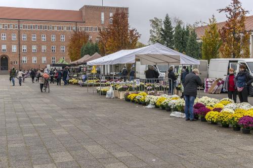 Targ Chryzantemowy w Pile. 2 listopada 2020. Fot. Marcin Maziarz