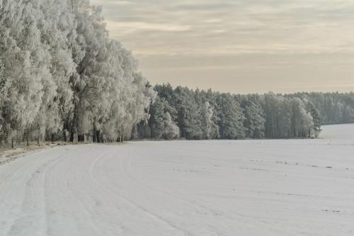 Zimowy poranek w okolicy Piły. Fot. Marcin Maziarz